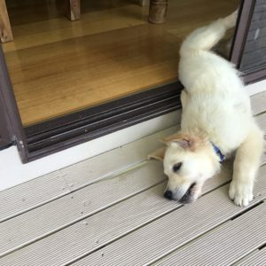 Cooper half in and half out of sliding door laying on floor